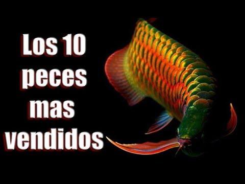 Los 10 peces de agua dulce mas vendidos del mundo youtube - Los peces mas bonitos del mundo ...