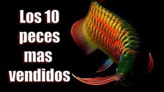Los 10 peces de agua dulce mas vendidos del mundo