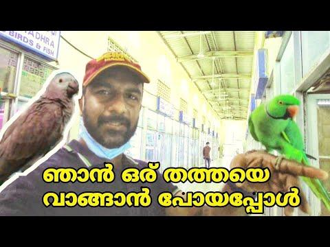 Birds and Animal Market Sharjah | Best Pets Market in UAE |