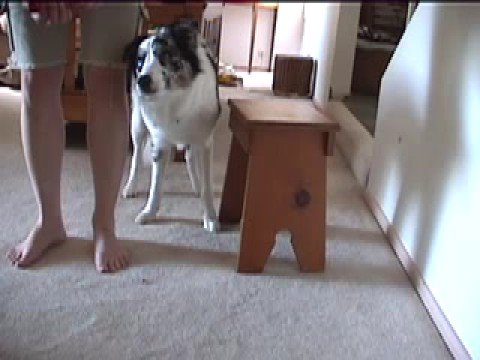 Dog Trick Tutorial: Teaching Limp