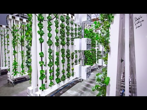 The Bright Agrotech Zipfarm Youtube