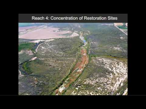 Webinar: Modeling Groundwater Support for Riparian Habitat in the Colorado River Delta
