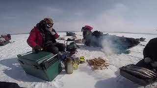 Dog sledding expedition in Mongolia