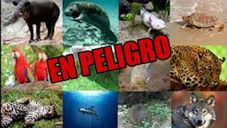 Los animales están en peligro (ley de bienestar animal)