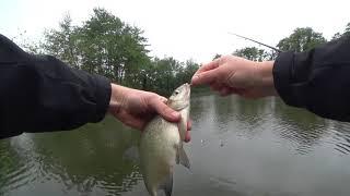 Рыбалка на сало и кукурузу Big Fishing