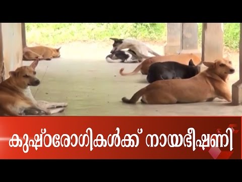 Leprosy Patients Under Stray Dog Attack Threat