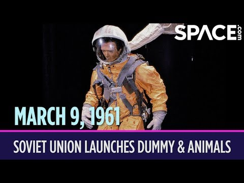 OTD in Space – March 9: Soviet Union Launches Dummy, Dog and Guinea Pig into Space