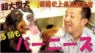 番組提供:ペットライン株式会社(http://www.petline.co.jp/) 心優し...