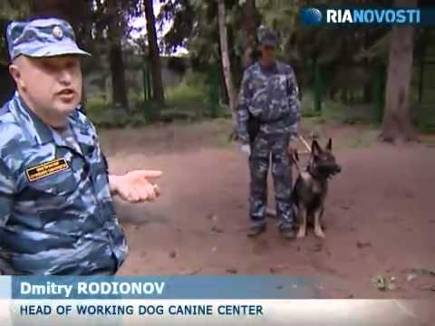 Dog handlers reveal secrets of training police dogs