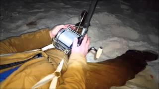 The Excitement of Shark Fishing - Reels Screaming and Rods Bending Part II