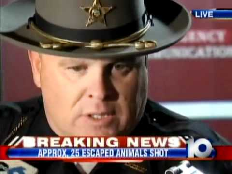 Wild Animals Breakout in Ohio: Sheriff's News Conference