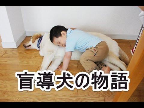 【泣ける話】盲導犬の物語