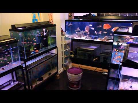 All My Aquarium Fish - Update