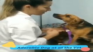 Doggy Checkup | Cute Moment at the Vet | Adorable Dog gives Blood at the Veterinarian.