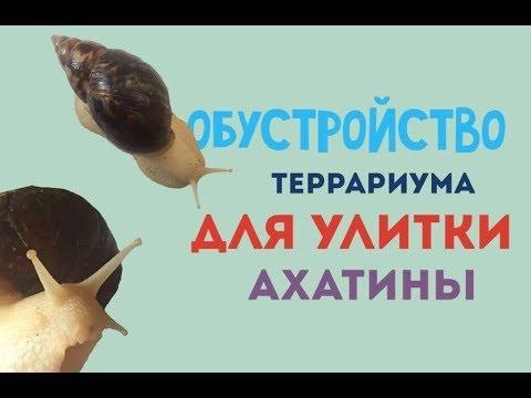 Улитка Ахатина - ОШИБКИ в содержании - кто найдет?