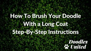 How To Brush Your Doodle Dog's Long Coat | Sheepadoodle, Goldendoodle..