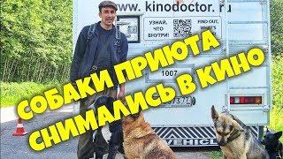 """Собаки приюта """"Верность"""" снимались в кино"""