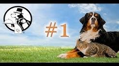 Canine Caviar Hangout #1 - Benefits of Alkaline Pet Food
