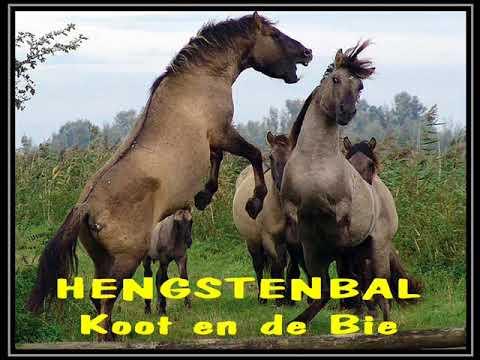 HENGSTENBAL 1977   Koot en de Bie