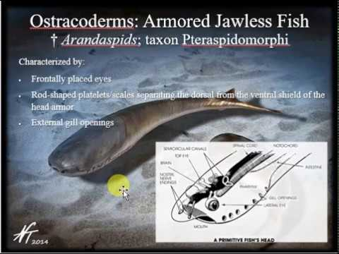 History Of Life  Pt 2: Paleozoic Era - Ordovician Through Permian Periods