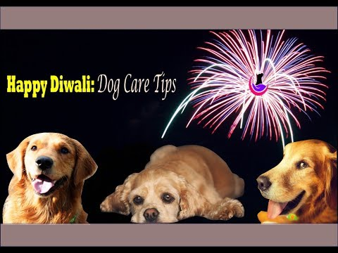 Happy Diwali: Dog care tips during festival (hindi)