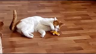 Кошачья мята, передоз))