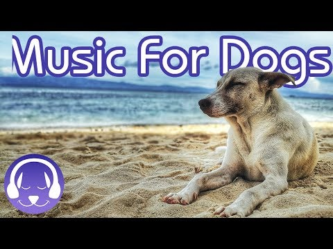 Dog Music: Instant Relaxation For Your Dog! (15 HOURS) (EXTENDED)