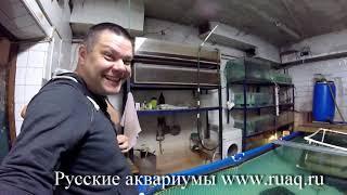 Рыборазводня arapaimastyle.ru, в гостях у Кондратьева Сергея