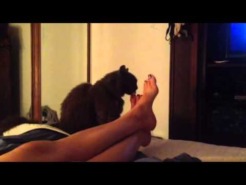 Cat loves toes