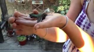 To catch a humming bird