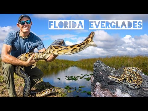 Bill Cunningham - VIDEO: Hunting Pythons In The Everglades