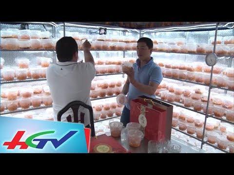 Thu nhập tiền tỷ từ căn phòng 9 mét vuông | BẢN TIN KINH TẾ NÔNG NGHIỆP – 27/9/2017
