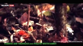 national geographic - böceklerin belgeseli