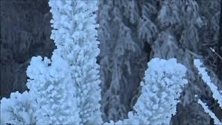 Ольга,Колька,Нюрка,зимний лес и...самолёты...