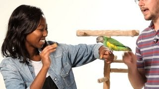 Get Your Parrot to Be Nice to Strangers   Parrot Training