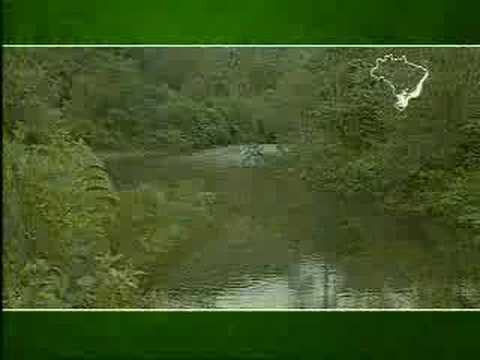Brazil for Travelers - Atlantic Rainforest