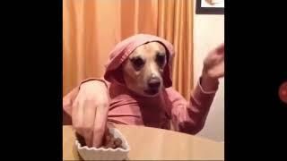 Funny Animals   Śmieszne Zwierzęta #2