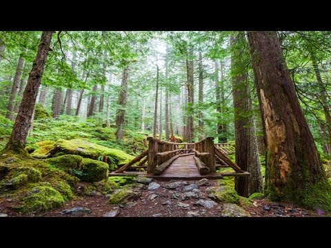 5 HOURS OF 3D MUSIC: Walk in the Nature with Realistic Natural Sounds