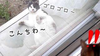 七三分けの野良猫君が庭にマーキングしていくんです…