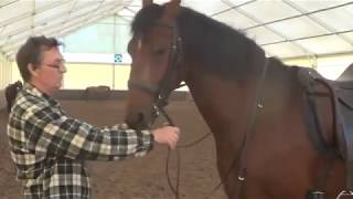 Schooling Dressage. Softening the nape of the horse (subtitled)