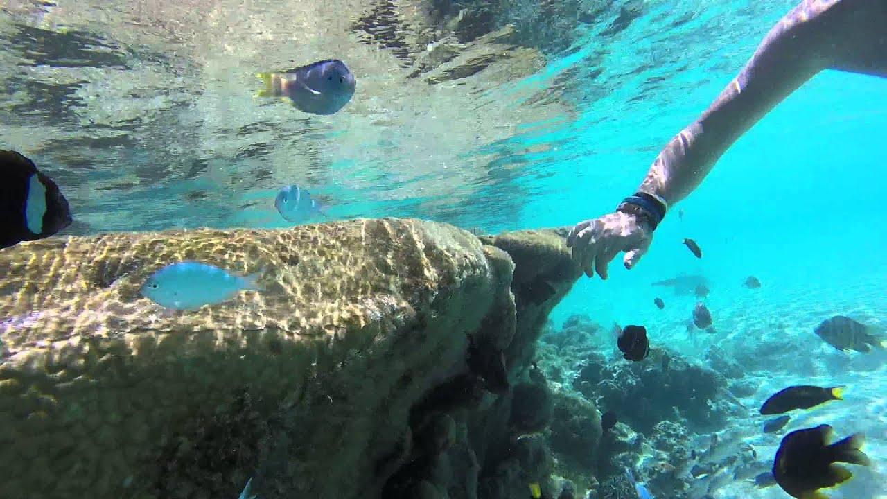 isle of pines aquarium