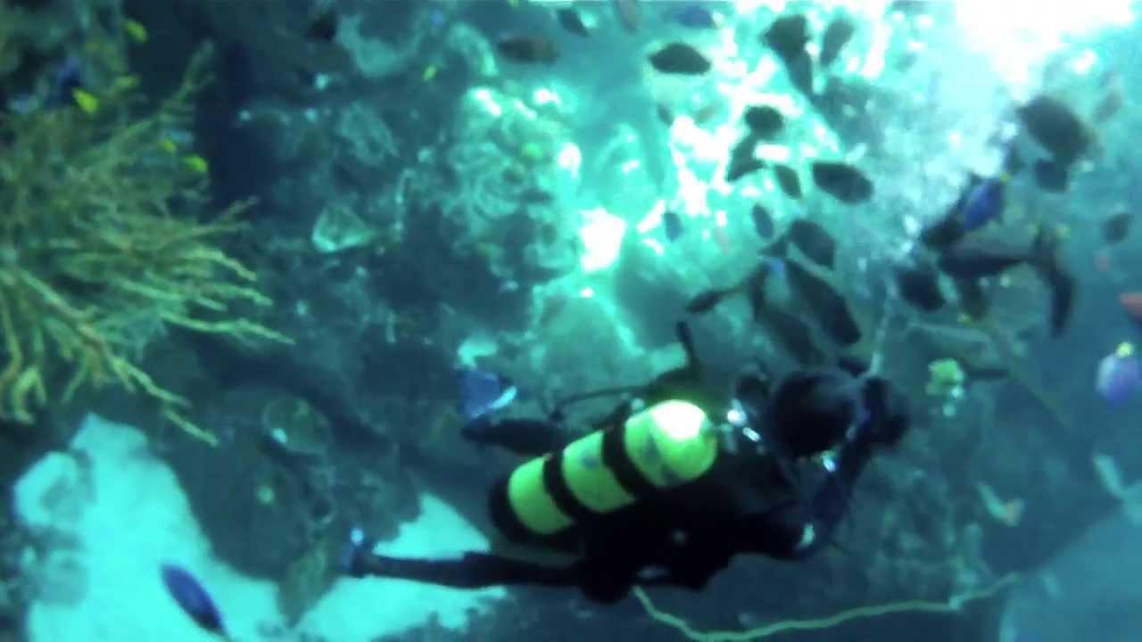 """VitalWarrior.Org - U.S. Navy SEALs """"Feed the Fish"""""""
