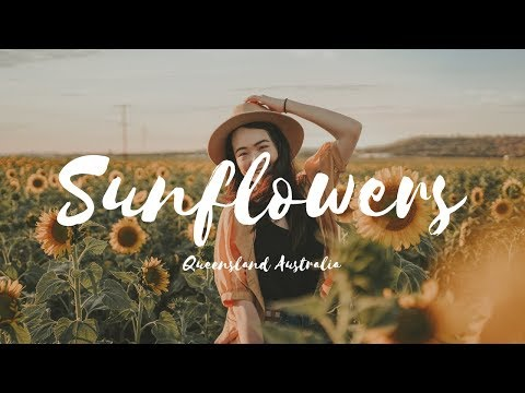 Sunflowers ALLORA QUEENSLAND Cinematic Film | Canon M50