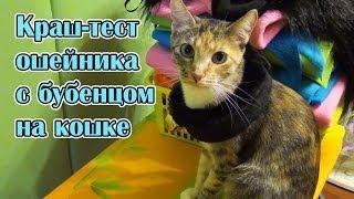 Краш-тест ошейника с бубенцом на кошке