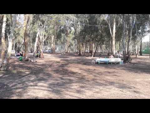 מבט מהיר: יער חדרה
