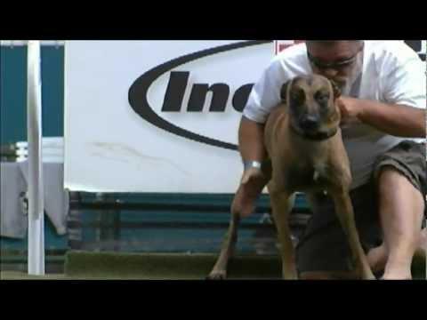 "new-""diving-dog""-world-record-holder-(31'-05"")"