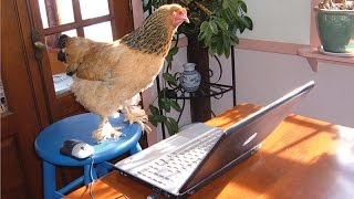 шок!смотреть всем! Gt 630 охлаждение замороженой курицей вурдалаки трелер