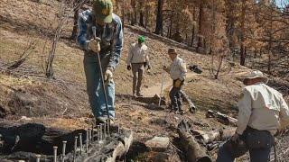 Volunteers Working To Rebuild Trails & Bridges Burned Down In Cameron Peak Fire