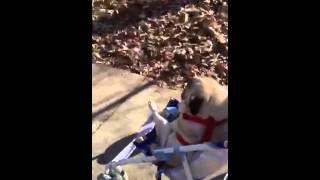 Winnie And Her Umbrella Stroller