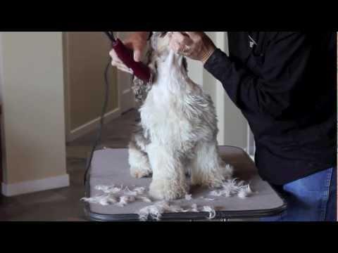 Cocker Spaniel Grooming - Part 2 of 7